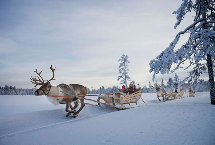 Family-Friendly-Holiday-Lapland