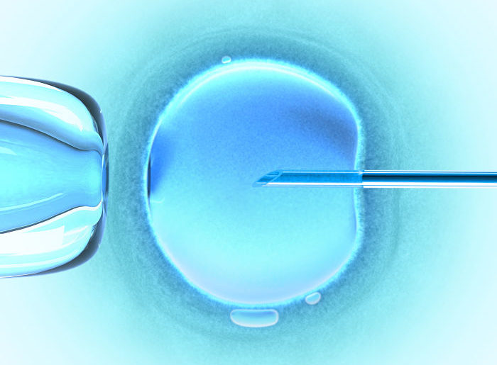 Ovum (In Vitro Fertilization)