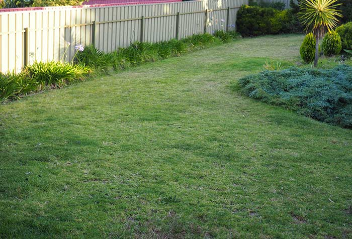 Munns-Review-Back-Lawn-Before