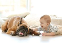 introducing-your-baby-to-your-dog