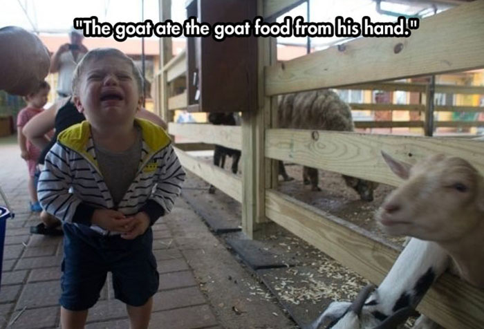 Crying child at a farm with goats