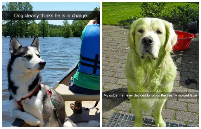 Dogs of Snapchat 10