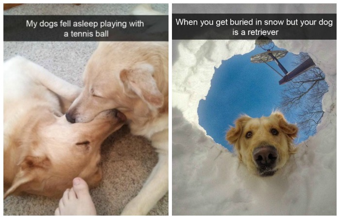 Dogs of Snapchat 3