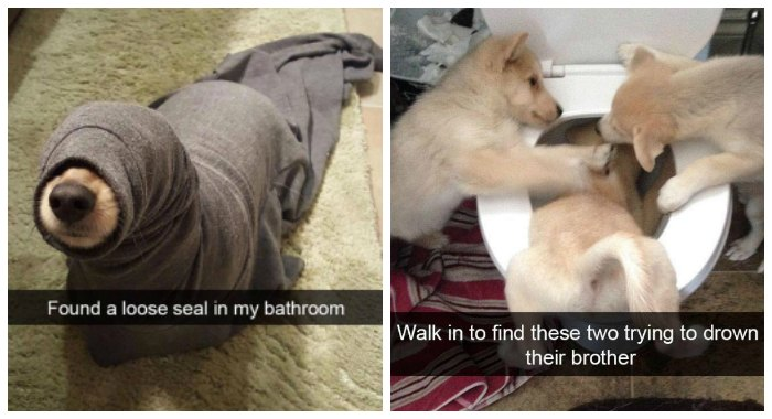 dogs of snapchat 12