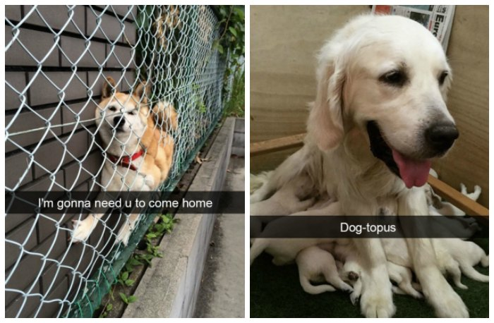 dogs of snapchat 16