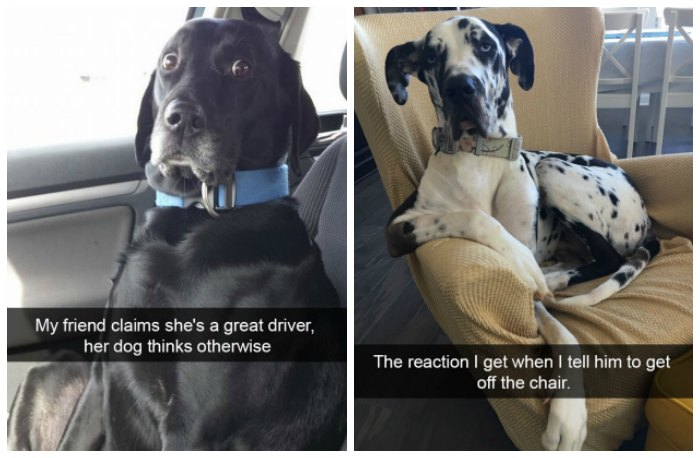 dogs of snapchat 20