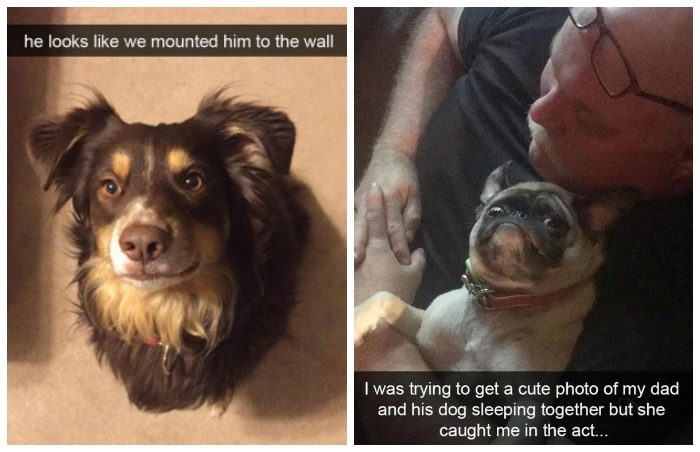 dogs of snapchat 4