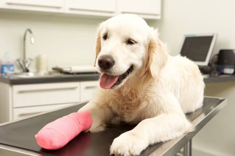 pet insurance for injured dog