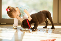 caring for pets - easy toddler chores