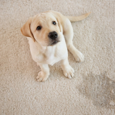 14 Ways to Stop Kids and Pets From Ruining Your Carpets