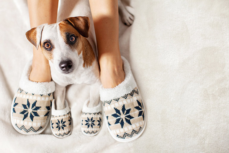 keep carpets clean from pets