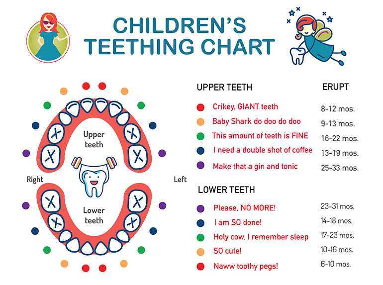 photograph about Baby Teeth Chart Printable referred to as Little one Teething Indications Indicators (Additionally a Effortless Teething Chart!)