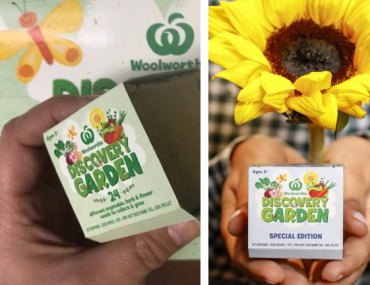 Woolworths limited edition sunflower seedlings