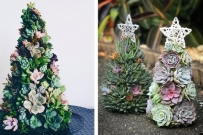 succulent christmas tree trend