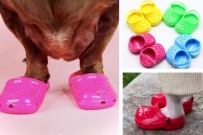crocs for dogs
